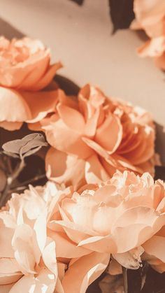 27 Best Ideas For Aesthetic Wallpaper Iphone 7 Plus Orange Aesthetic, Flower Aesthetic, Aesthetic Vintage, Makeup Aesthetic, 90s Aesthetic, Aesthetic Backgrounds, Aesthetic Iphone Wallpaper, Aesthetic Wallpapers, Flowers Wallpaper