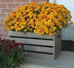 [wood-crate-with-mums3.jpg]