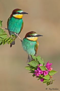 Bee-eaters by Roy Avraham on 500px