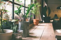 Indoor Plants That Can Actually Purify the Air in Your Home These household plants are all NASA scientist-approved for helping clear airborne toxins.These household plants are all NASA scientist-approved for helping clear airborne toxins. Small Potted Plants, Cool Plants, Ficus, Suculentas Interior, Indoor Plants Clean Air, Deco Jungle, Plantas Indoor, Household Plants, Office Plants