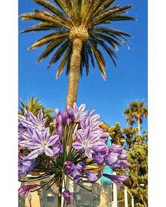 كل يوم هو عيد وكل يوم فجرا جديد .. _______________________________ #happy_eid #flower #phonegraphy#sandiegophotos #santamonica #pacificbeach  #عيدكم_مبارك #f4f #happyness #sandiego #landscapephotography  #sandiegogram #naturelovers #travel #colorful  #like4like #follow4follow #Coronado #seaportvillage #beauty  #photography #yacht #eid_mubarak  #naturephotography #bestoftheday #lajolla #surfing #eid #sunsetcliffs #lajollalocals #sandiegoconnection #sdlocals - posted by Ayman Alzaid…