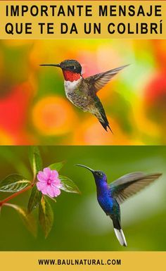 Si ves un colibrí da gracias, porque él está tratando de darte 1 de estos 9 mensajes sublimes Jeny Rivera, Wings Etc, Bird Quotes, Acrylic Painting Lessons, Vinyasa Yoga, Yoga Quotes, Science And Nature, Wicca, Hummingbird