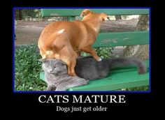 Cats mature