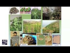Dr. Sunil Aggarwal on the history of medical cannabis research - YouTube