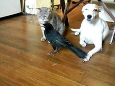 BIRD FEEDS CAT & DOG - - YouTube