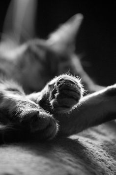 Black and White Paws Cat Photography