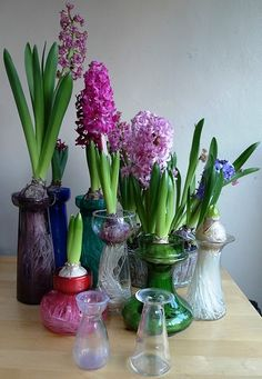 Indoor bulb garden. Perfect for a living spring alter.