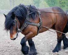 I'm old enough that I remember our farm had horses for the work, not tractors.........