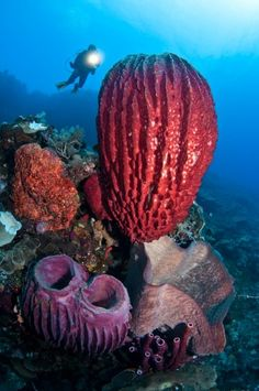 Sponges. The only animals without true tissues.