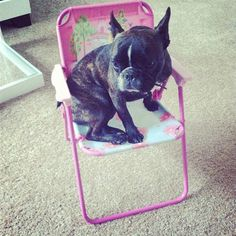 Bought Beta a special princess chair! She loves it.  watch beta in action on youtube -  http://www.youtube.com/playlist?list=PL0Lu5hF8pI8kxoFqBvgnx03nRipG66OSu #dogs #cute
