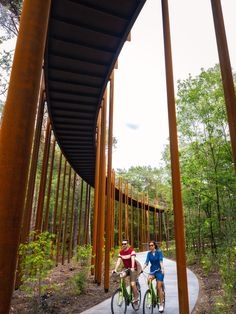 Completed in 2019 in Hechtel-Eksel, Belgium. Images by Visit Limburg. The new cycle path through the trees adds a unique experience to the Limburg cycle route network. Cyclists ride 700 metres along a cycle bridge – a. Landscape Architecture, Landscape Design, Architecture Design, Forest Resources, Conifer Trees, Walking Paths, Pedestrian Bridge, Pathways, Construction