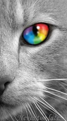 Mačička. г § om