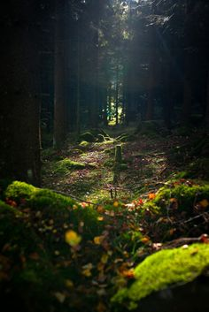 Dark Forest, Gothenburg, Sweden photo via larri