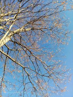 kohalmitamas:  Trees and sky by MarilenaIordache
