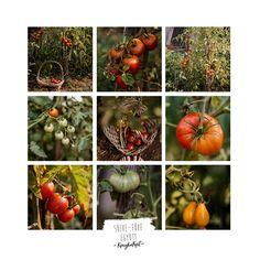 KonyhaKert - Vetésterv részletesen, növénytársításokkal - Sülve-főve együtt Garden Tips, Vegetables, Food, Essen, Vegetable Recipes, Meals, Yemek, Veggies, Eten