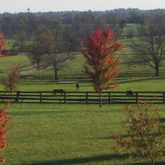 View from my bedroom window... Love Kentucky!