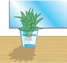 10 st ck wasserspender automatische bew sserung zimmerpflanzen topfpflanzen zimmerpflanzen. Black Bedroom Furniture Sets. Home Design Ideas