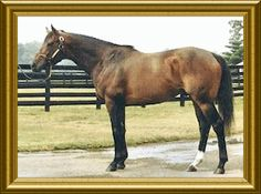 Chief's Crown, son of Danzig and Six Crowns, a daughter of Secretariat. He won the inaugural running of the Breeders' Cup Juvenile in 1984