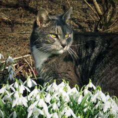 I'm guarding the spring so it won't go away again! by RavenMontoya.deviantart.com on @DeviantArt