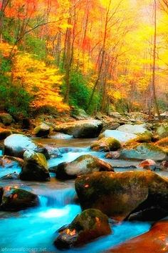 Fall in Tennessee ;-) so very beautiful