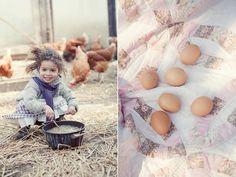 תרנגולות
