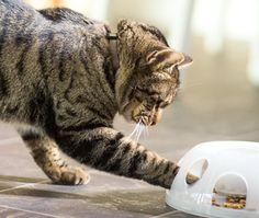 Try the True Nature Journal Puzzle Feeders activity. Put a little challenge on the menu. #cats #diet www.purinaone.com/TrueNatureJournal