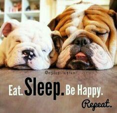Eat sleep be happy repeat #buldog