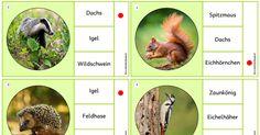 Miniklammerkarten_Waldtiere.pdf
