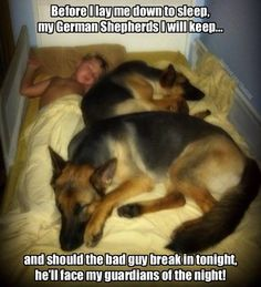 Wicked Training Your German Shepherd Dog Ideas. Mind Blowing Training Your German Shepherd Dog Ideas. Funny Dog Memes, Funny Animal Memes, Cute Funny Animals, Funny Animal Pictures, Dog Pictures, Funny Dogs, Beautiful Dogs, Animals Beautiful, I Love Dogs