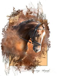 Bay Beauty Art Print by Linda Finstad. All prints are professionally printed, packaged, and shipped within 3 - 4 business days. Choose from multiple sizes and hundreds of frame and mat options. Horse Drawings, Animal Drawings, Art Drawings, Arte Equina, Watercolor Horse, Horse Artwork, Realistic Paintings, Art For Art Sake, Equine Art