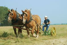 The Camp Creek Theshing Show near Waverly Nebraska takes place during the hottest week of July every year. These draft horses are pulling an old John Deere Number 4 sickle bar mower to cut grass for hay. All The Pretty Horses, Beautiful Horses, Animals Beautiful, Farm With Animals, Agriculture, Amish Farm, Shire Horse, Horse Saddles, Western Saddles