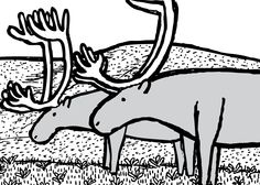 Two reindeer ponder their newfound freedom.    Image from Stuart McMillen's comic St Matthew Island.
