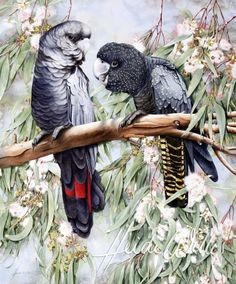 A pair of red-tailed black cockatoos perched in a eucalyptus tree Heidi Willis WATERCOLOR