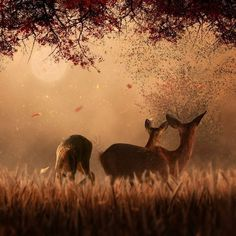etimr: by Caras Lonut