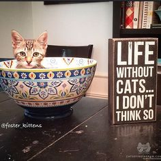 """From @foster_kittens #catsofinstagram"""
