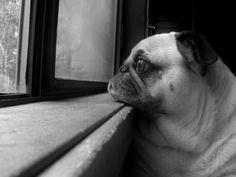 """trinns: """"  Waiting Patiently by Nancy (Trinn) Andersen Via Flickr: My sweet…"""
