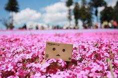 Hitsujiyama Koen - Chichibu by localjapantimes, via Flickr