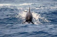 cutest dolphin!    Picture byAnai Colyer