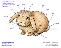 Copic Coloring Guide: Bunny from Nature Babies 1 by Crafts - Cards and Paper Crafts at Splitcoaststampers