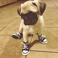"""""""See my new shoes?"""""""