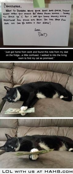 Reliable Cat Bank