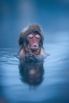 Japanese snow monkey enjoying winter in a natural hot spa. Take a look at its enjoyable expression. I know the feeling so well.....ahhh.