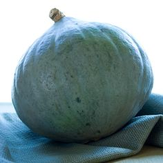 Savory Squash Puree with extra-virgin olive oil, garlic and herbs. Blue Hubbard Squash via Webster Squash Puree, Squash Seeds, Blue Hubbard Squash, Winter Squash Varieties, Green Fruit, Medicinal Herbs, Vegetable Side Dishes, Avocado, Healthy