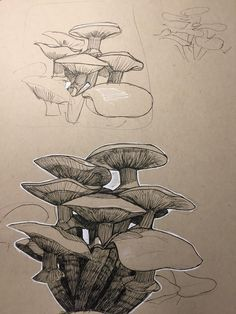 Sepia black and white Paper Drawing, Paper Art, Art Sketches, Art Drawings, Crayons Pastel, Nature Sketch, Arte Sketchbook, Mushroom Art, Drawing Studies