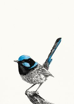 Superb Fairy-wren - Giclée Print – Marini Ferlazzo - Art for Wildlife Australian Flowers, Australian Animals, Australia Tattoo, Drawing Rocks, Painted Rocks Craft, Bird Artwork, Art Courses, Bird Drawings, Art For Art Sake