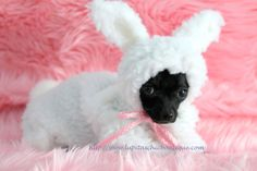 Dog Costume Snuggle Bunny Little Puppy Rabbit Halloween Costume.  (via Etsy)