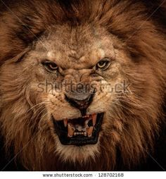Close-up shot of roaring lion by Nejron Photo, via Shutterstock