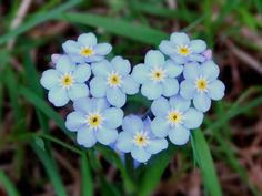 Forget me nots...
