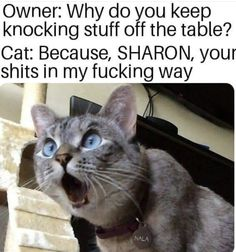 That's Why, Sharon - World's largest collection of cat memes and other animals Funny Animal Memes, Funny Animal Pictures, Funny Animals, Cute Animals, Funny Memes, Animal Humor, Animal Fun, Dog Memes, Animal Quotes