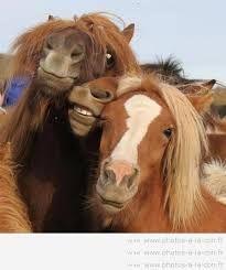 """Résultat de recherche d'images pour """"cheval drôle"""""""